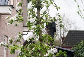 residence-garden-aanleg-fruitbomen-preview