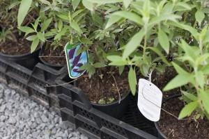 aanleg kleinere tuin