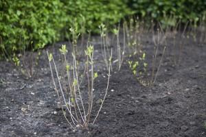 tuinaanleg kleinere tuin