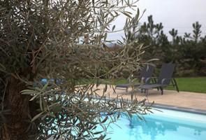 residence-garden-tuintotaal-mijnheerenland-preview